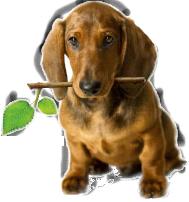 dog_online_billing