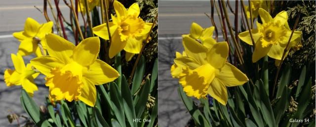 flowercomparison