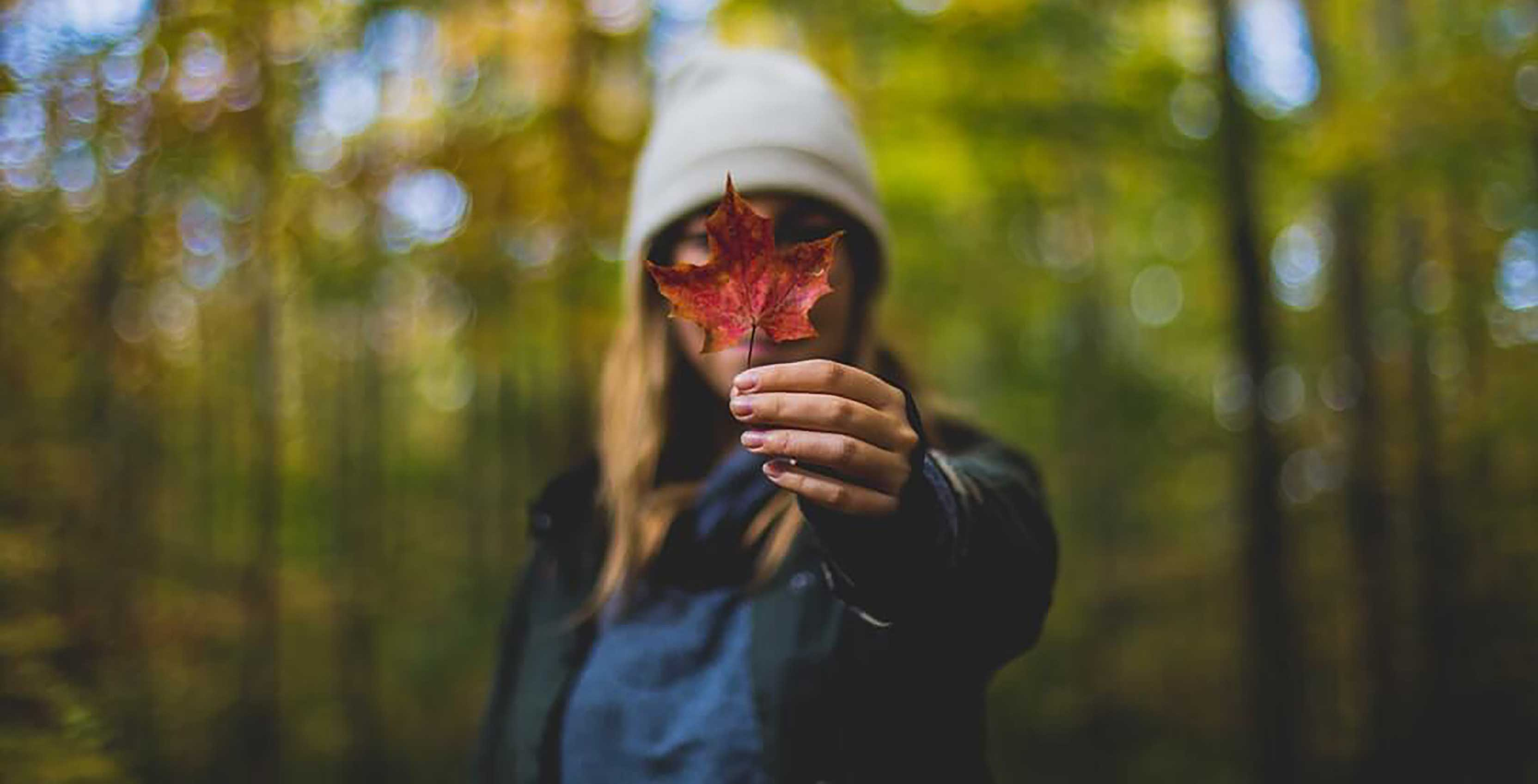 Maple leaf in hand