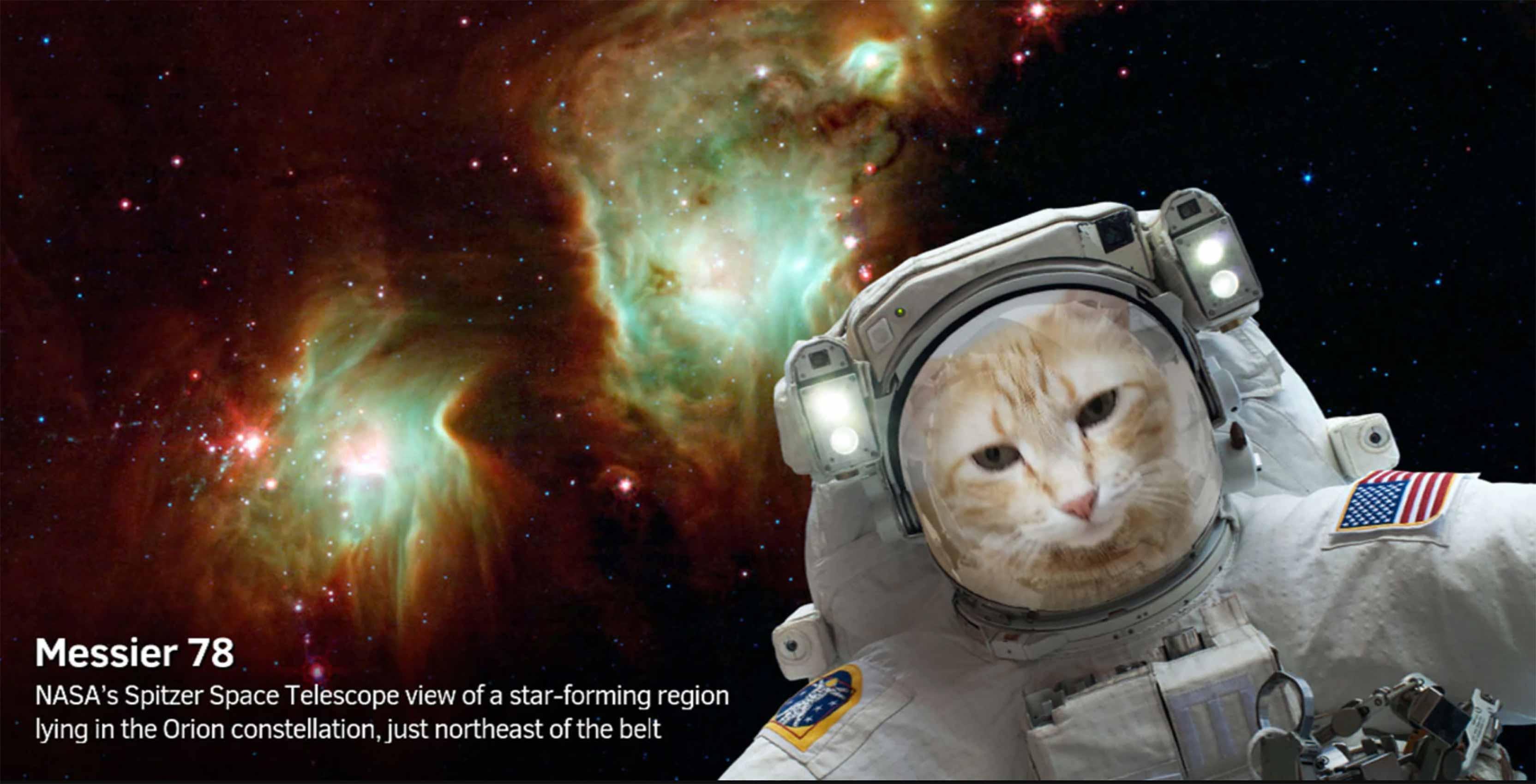 NASA catstronaut
