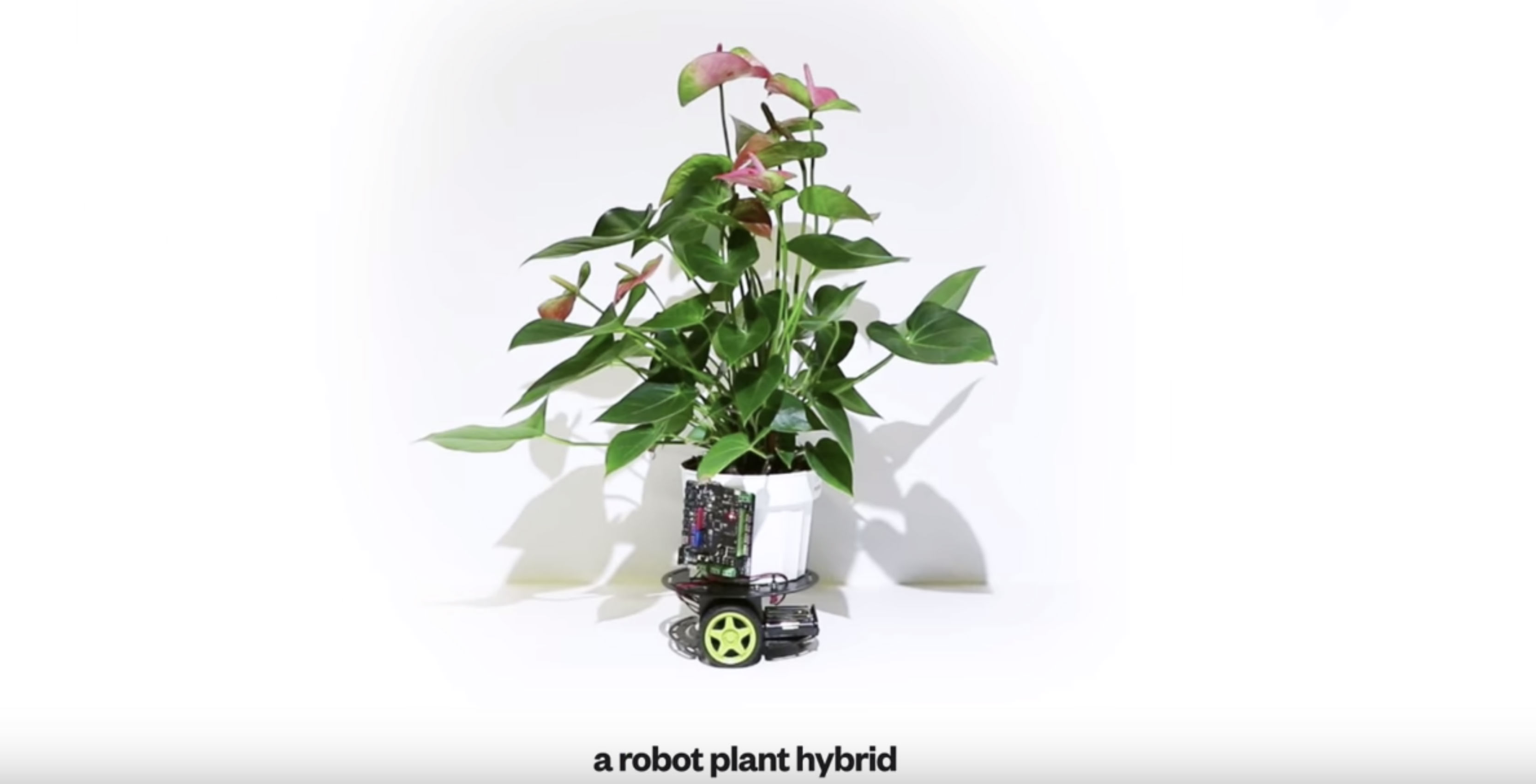 MIT uses robotics to keep plants alive