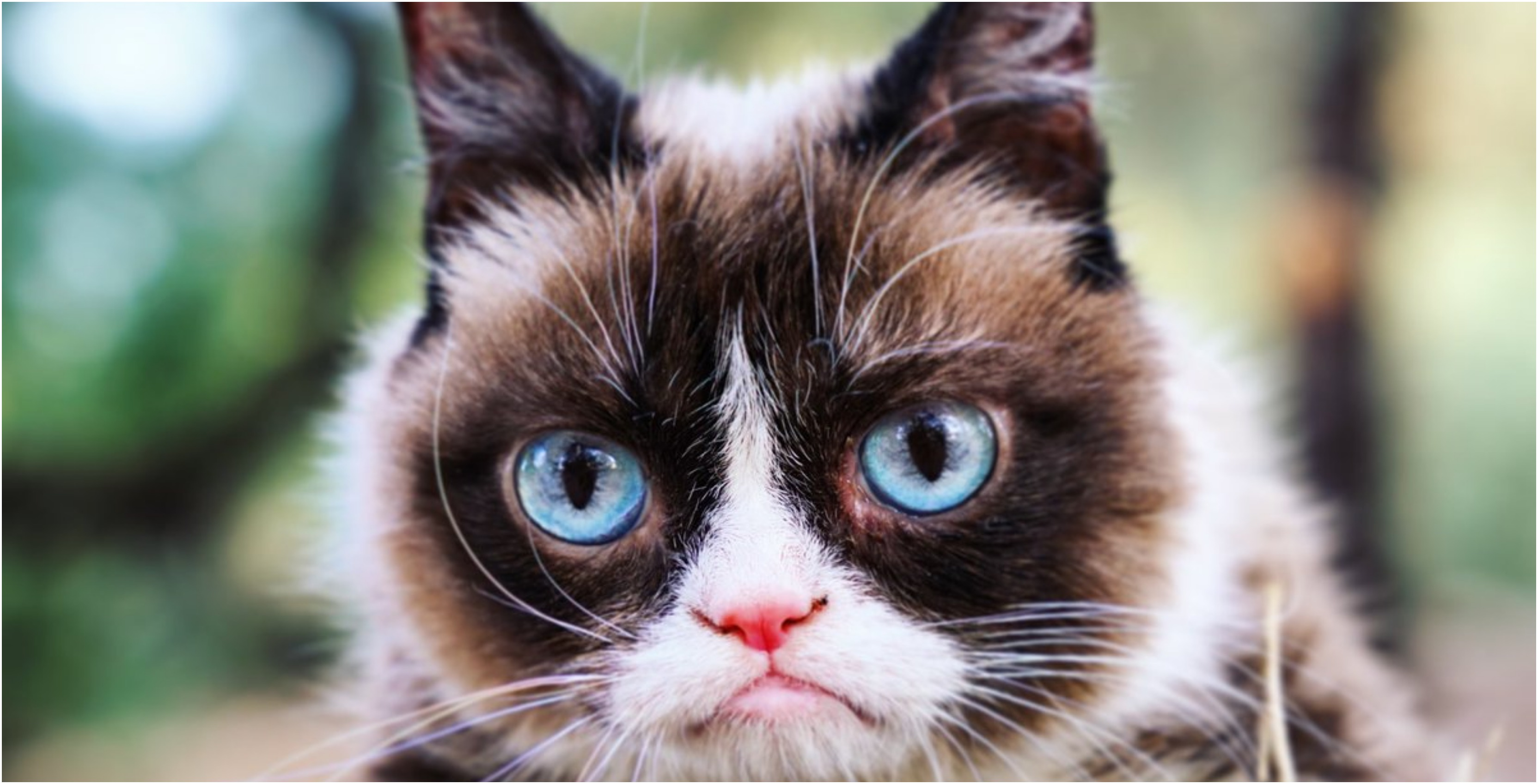 Grumpy Cat, internet meme legend and celebrity, has died