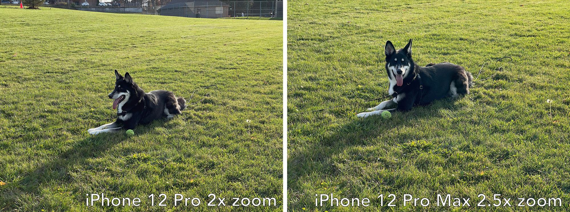 iPhone 12 Pro 2x zoom vs iPhone 12 Pro Max 2.5xzoom