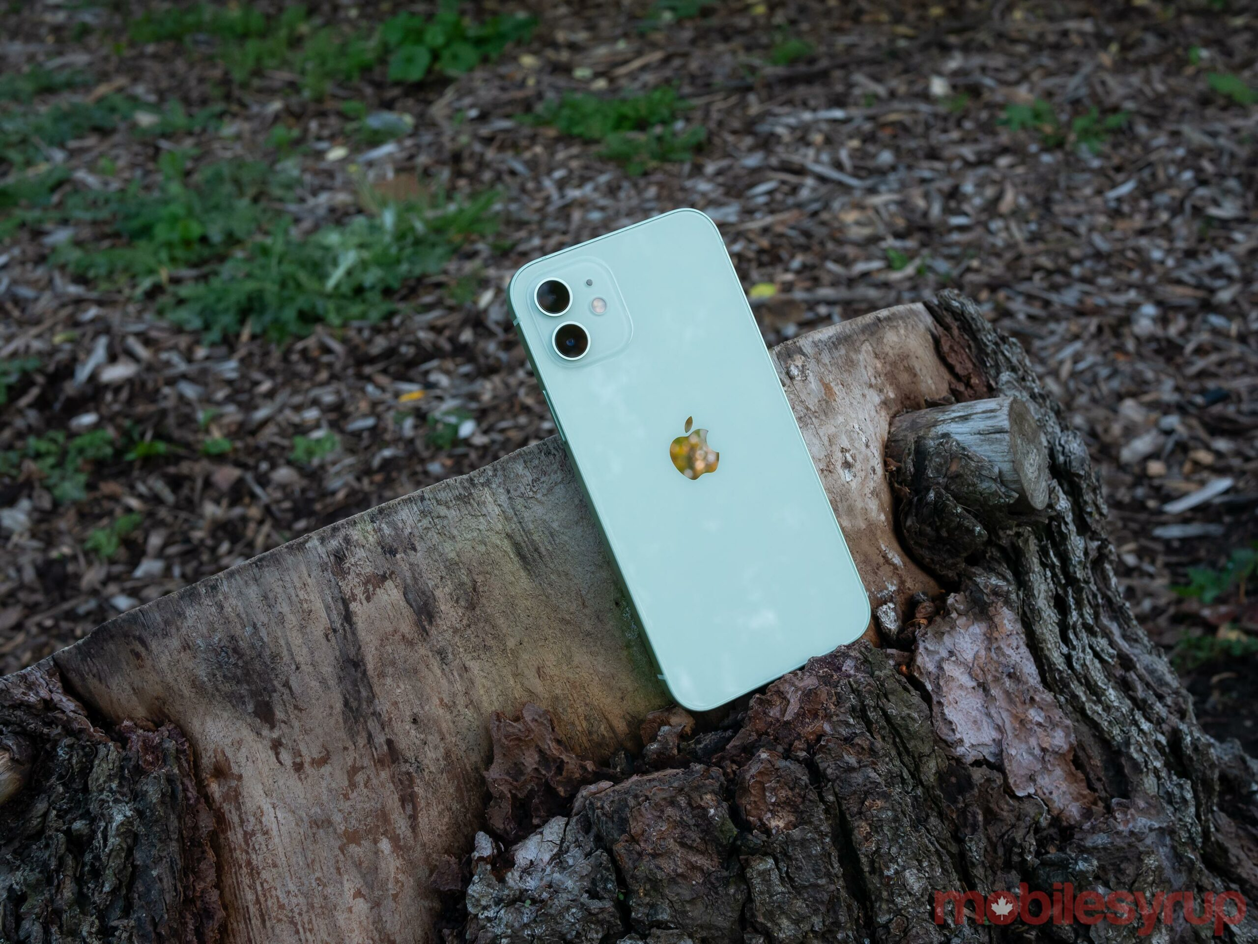 iPhone 12 on a stump