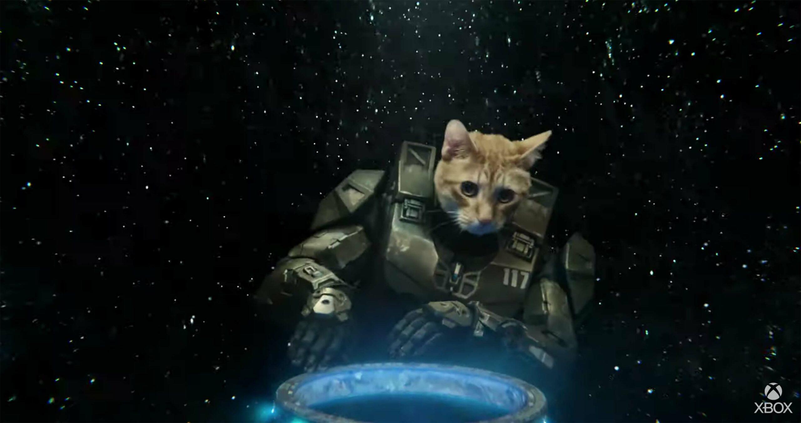 Master Chief cat