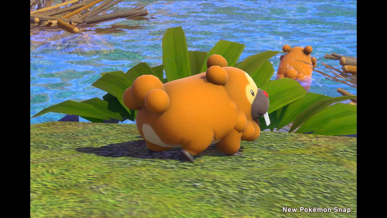 Bidoof in Pokemon Snap