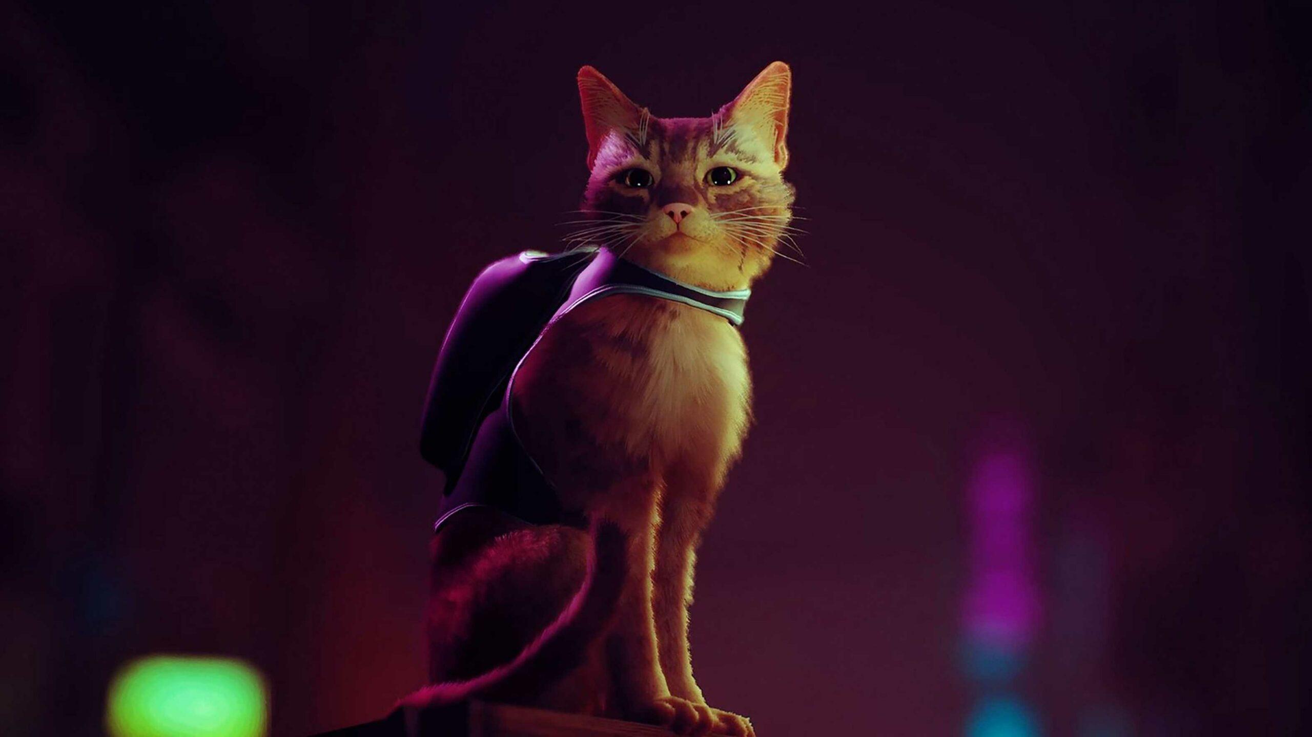 Stray game cat
